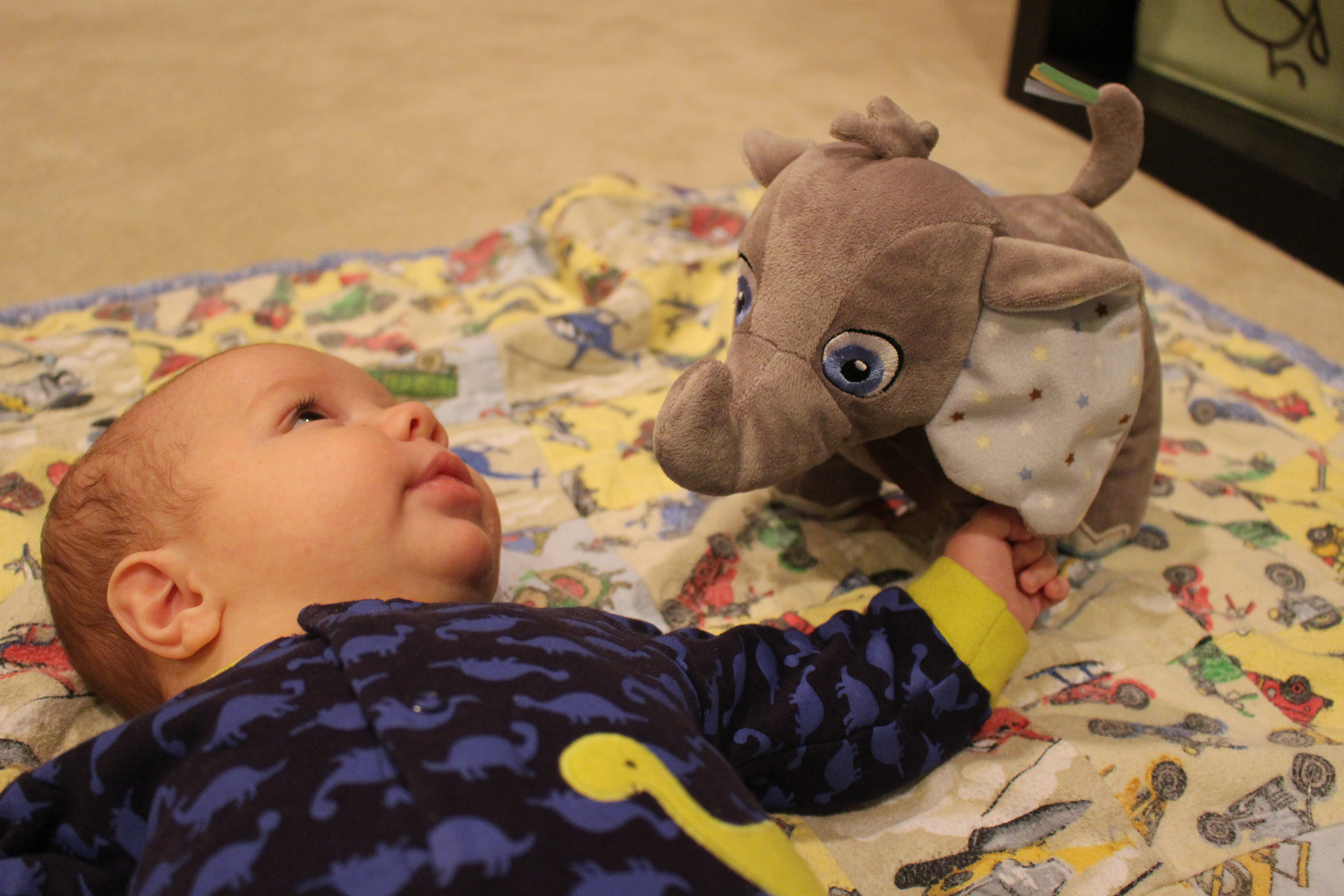 a boy and his elephant